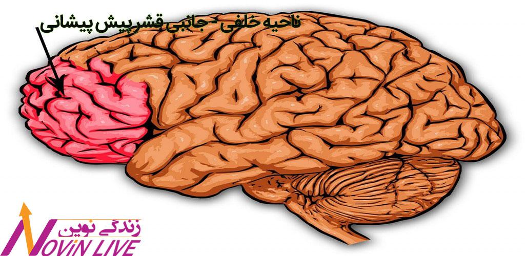 ناحیه خلفی - جانبی قشر پیش پیشانی -آناتومی تصمیم گیری خرید مغز-نورومارکتینگ