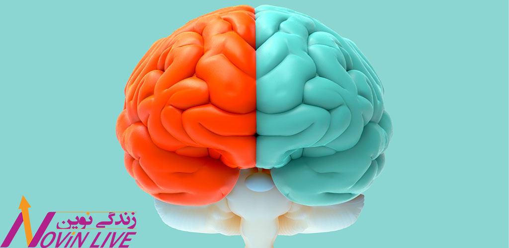نیمکره چپ مغز  -تاثیر درک کارکرد ذهن بر زندگی